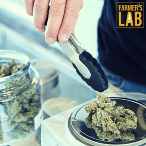 Weed Seeds Shipped Directly to Ocean Springs, MS. Farmers Lab Seeds is your #1 supplier to growing weed in Ocean Springs, Mississippi.
