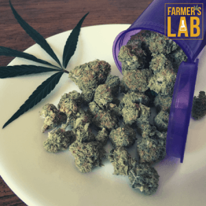 Weed Seeds Shipped Directly to Patterson, LA. Farmers Lab Seeds is your #1 supplier to growing weed in Patterson, Louisiana.