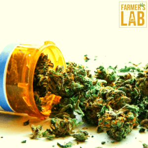 Weed Seeds Shipped Directly to Pinson, AL. Farmers Lab Seeds is your #1 supplier to growing weed in Pinson, Alabama.