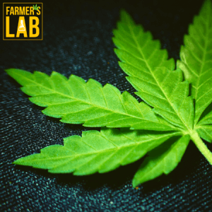 Weed Seeds Shipped Directly to Richmond Hill, GA. Farmers Lab Seeds is your #1 supplier to growing weed in Richmond Hill, Georgia.
