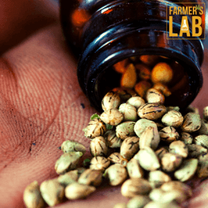 Weed Seeds Shipped Directly to Salmon Arm, BC. Farmers Lab Seeds is your #1 supplier to growing weed in Salmon Arm, British Columbia.