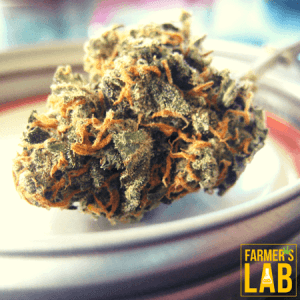 Weed Seeds Shipped Directly to Sunnyside, OR. Farmers Lab Seeds is your #1 supplier to growing weed in Sunnyside, Oregon.