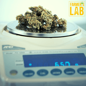 Weed Seeds Shipped Directly to The Dalles, OR. Farmers Lab Seeds is your #1 supplier to growing weed in The Dalles, Oregon.