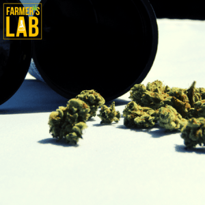 Weed Seeds Shipped Directly to Yorkville, IL. Farmers Lab Seeds is your #1 supplier to growing weed in Yorkville, Illinois.