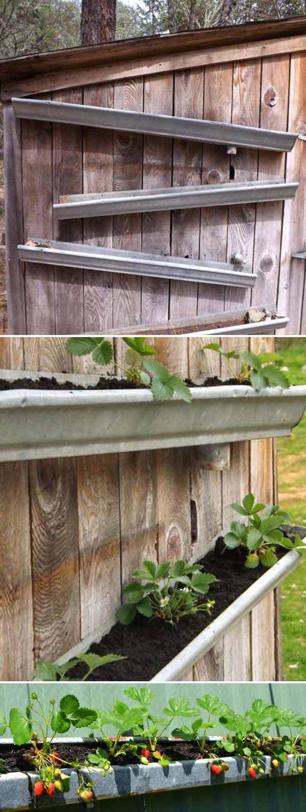 Rain gutters Strawberry Garden