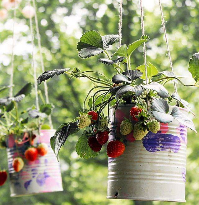 Hanging Strawberry Planters