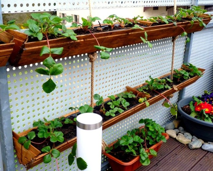 Create your own hanging strawberry planter