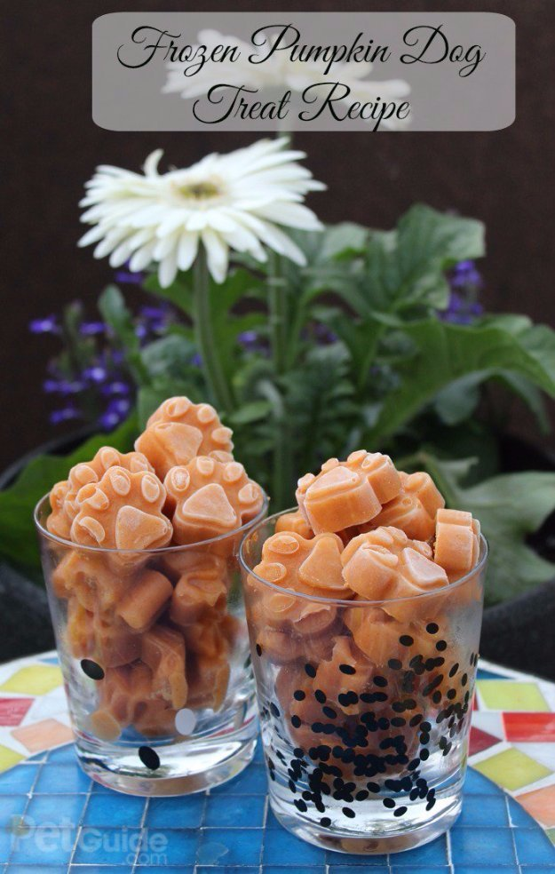 Frozen Pumpkin Dog Treat Recipe