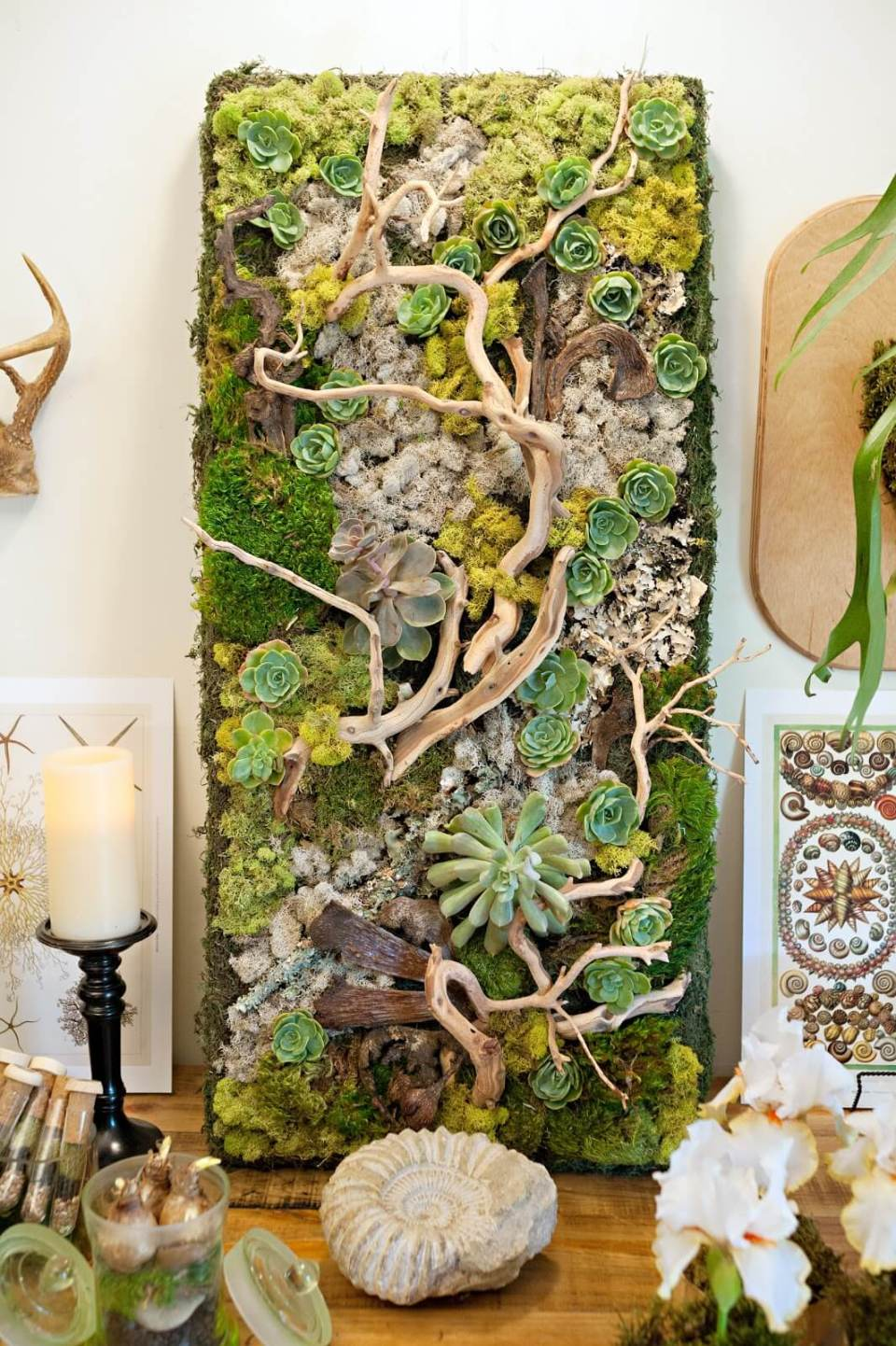 Embellished Wall Panel Showcases Succulents and Driftwood