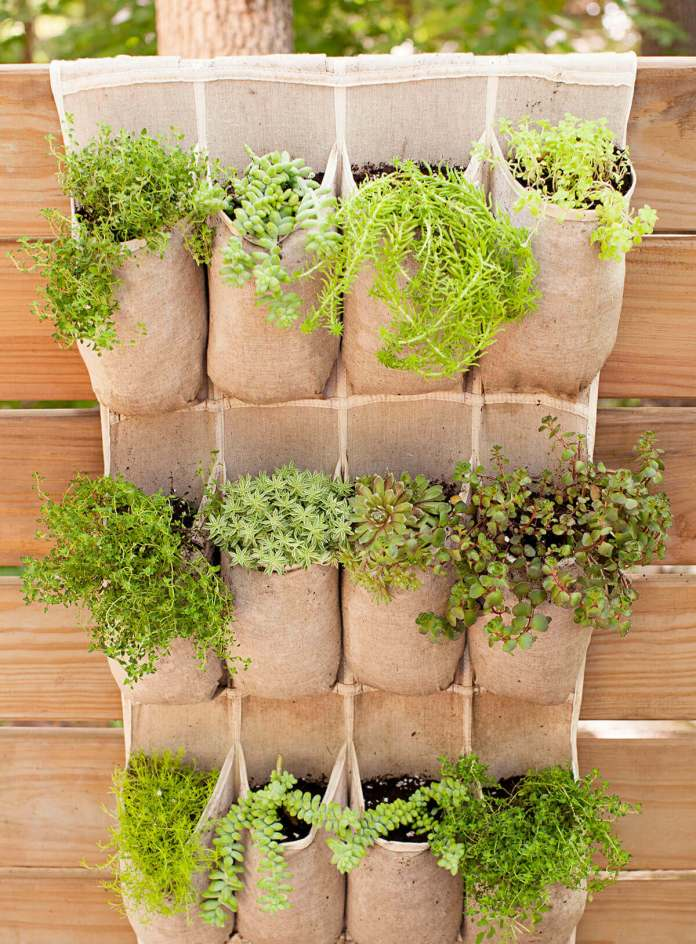 Shoe Organizer Holding Herbs and Succulents