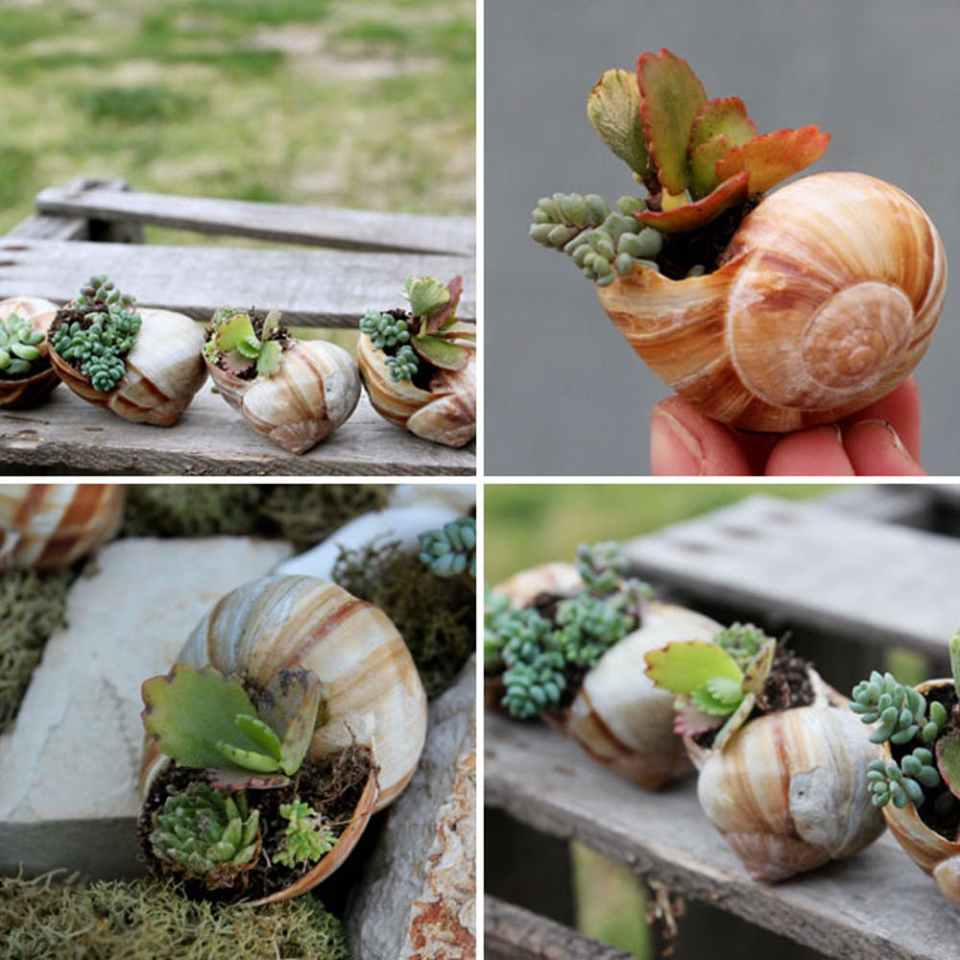 Miniature Shell Garden