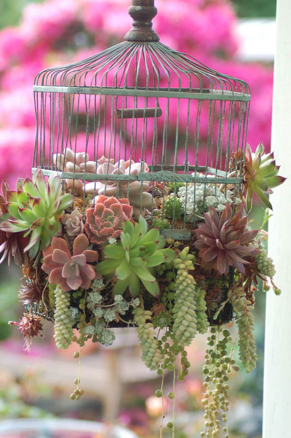 Succulent Garden Ideas: Caged But Wonderfully Free