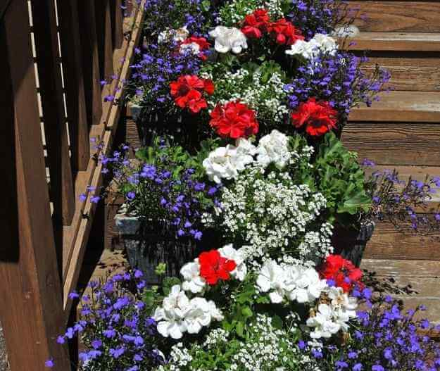 Red, White, And Blue Plants