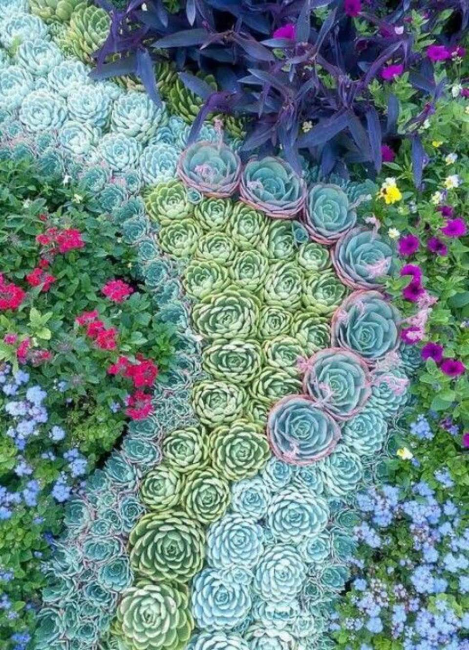 Succulent Garden Ideas: Regal Pathways