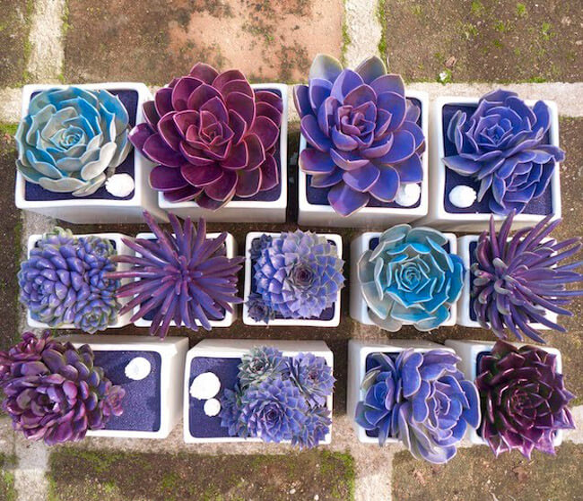 Succulent Garden Ideas: One To A Peg