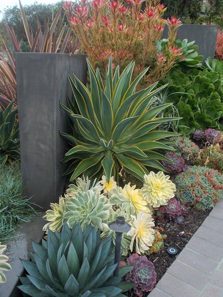 Succulent Garden Ideas:  California Dreaming