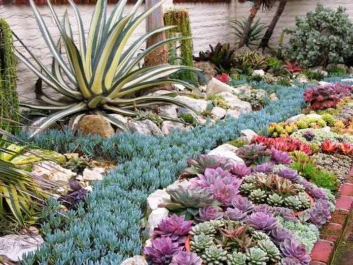 Succulent Garden Ideas: A Little Bit Of Heaven