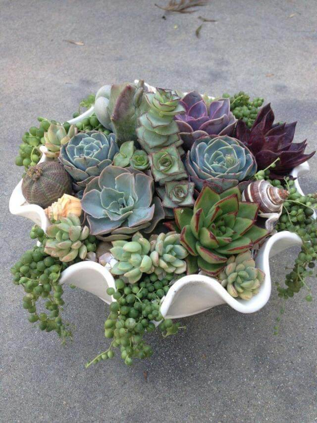 Succulent Garden Ideas: Neptune's Vineyard