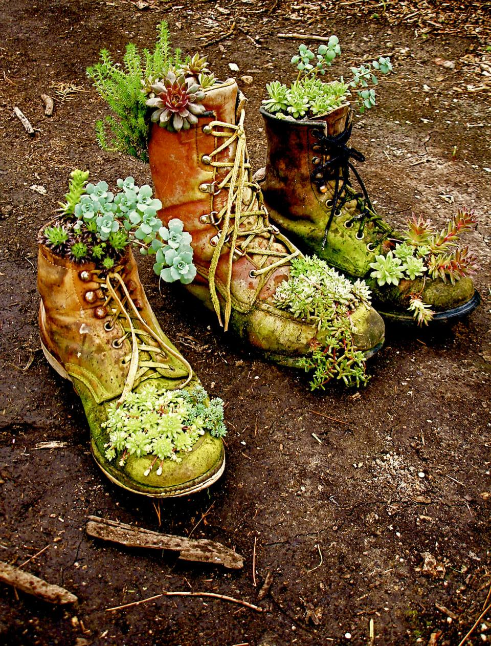 Succulent Garden Ideas: Boots On The Ground