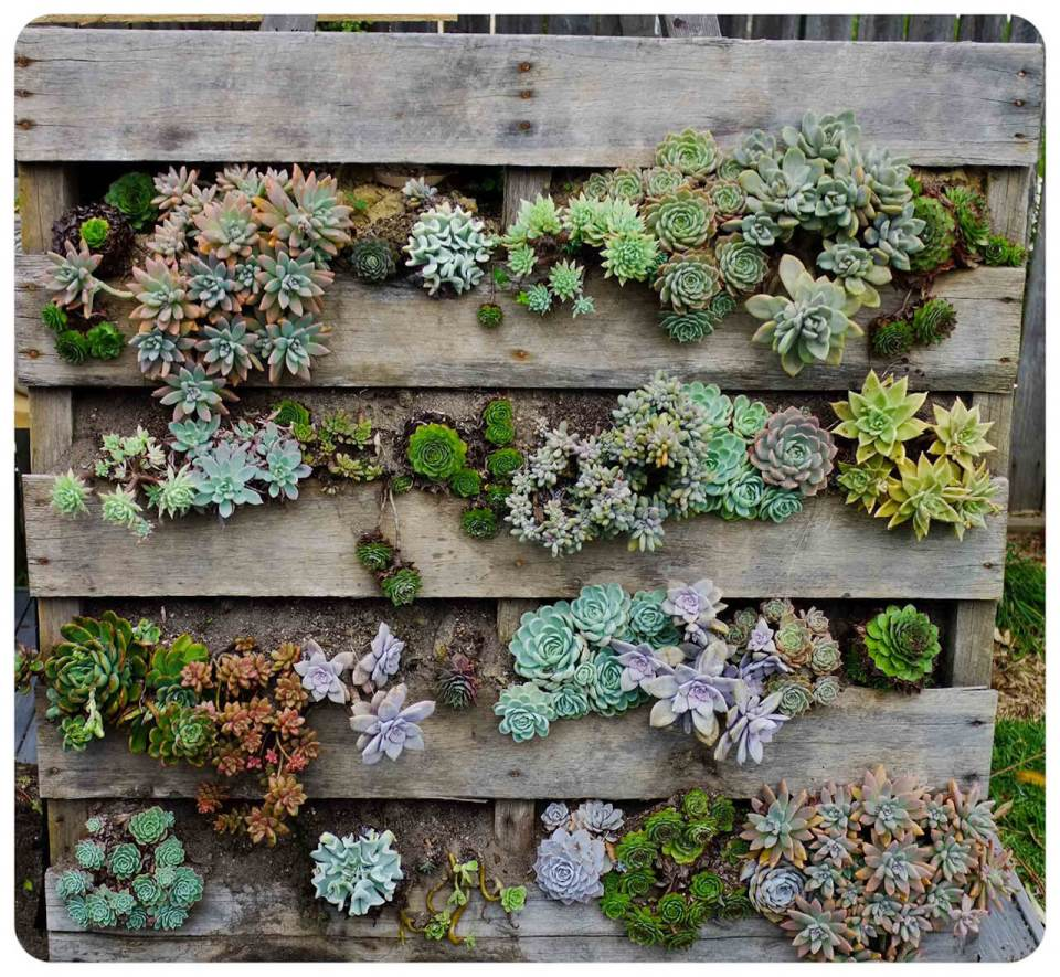 Succulent Garden Ideas: Rack Against A Wall