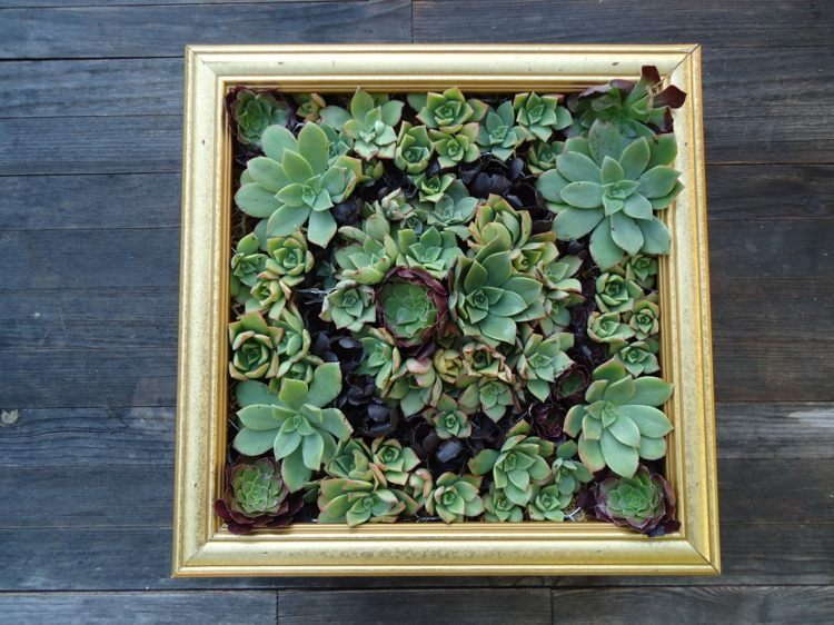 Succulent Garden Ideas: Succulent Green Wall with an Old Frame