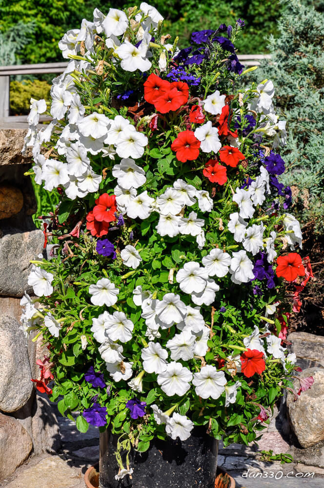 DIY Flower Towers Ideas: Vine-Free Wall of Flowers