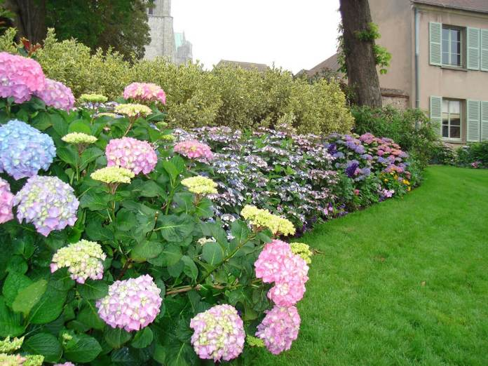 Flower Bed Ideas: Flower Bed for Small Yards