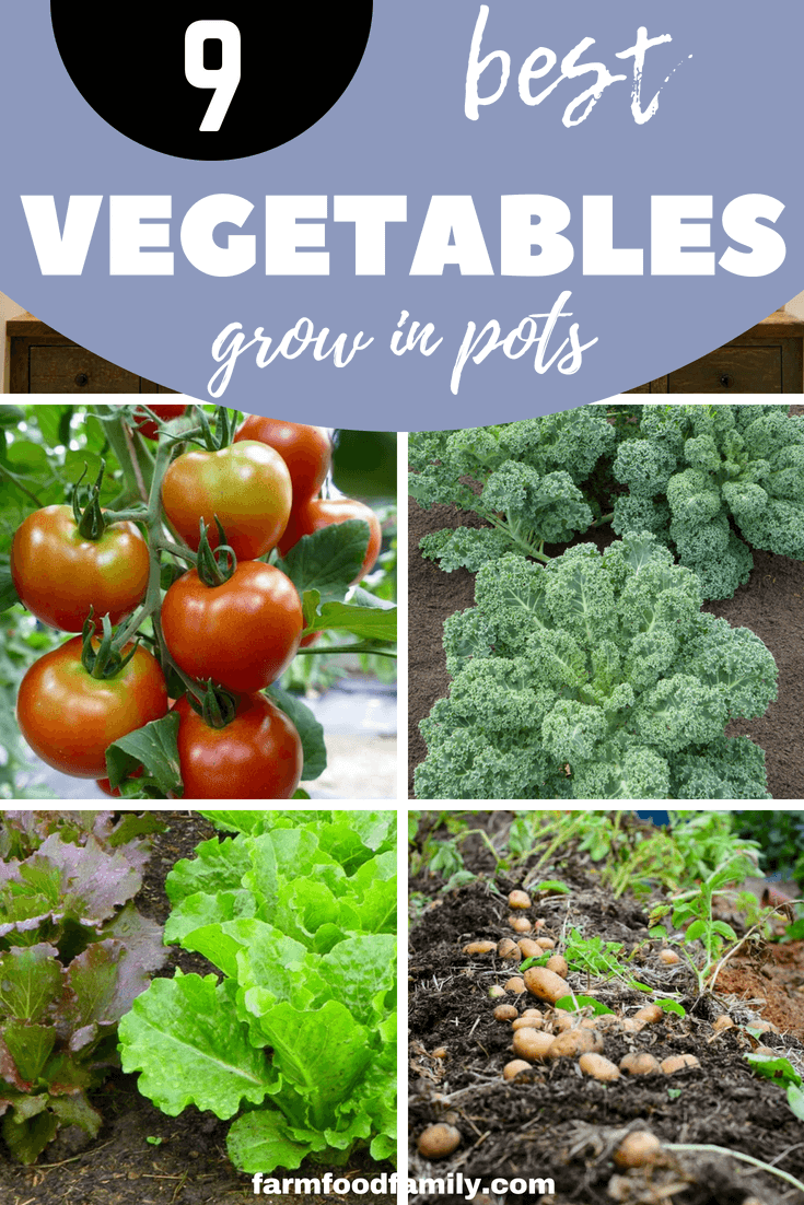 Growing vegetables is an option that every homeowner should definitely consider. It's an efficient way to ensure a bountiful harvest. We hope that our list helped you pick a crop to grow. #vegetablegarden #gardening #farmfoodfamily