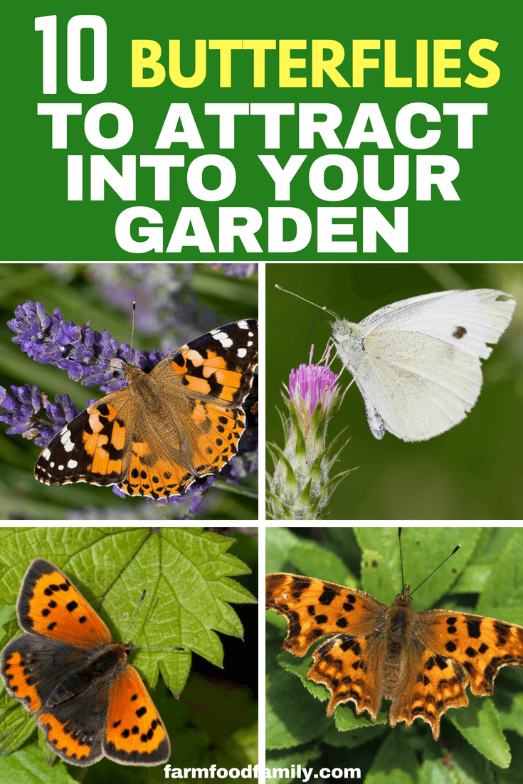 Town or country, summer is a busy time in any plot; and in addition to the numerous colorful blooms we all love, it is the season of what I call 'flying flowers' – bees, butterflies, moths, hoverflies and dragonflies. #gardeningideas #farmfoodfamily