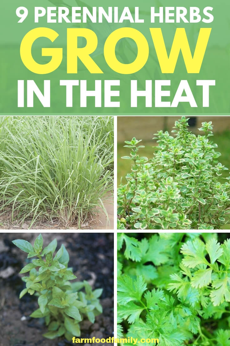Perennial Herbs: 9 Herbs That Grow In The Heat