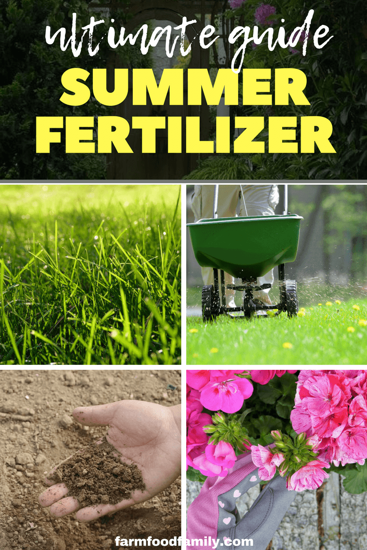 Anyone wanting to get the best garden displays should have a selection of fertilizers ready to hand through summer. Indeed, away from the border they become essential where composts hold only limited nutrients for basket and container plants. #gardentips #garden #farmfoodfamily