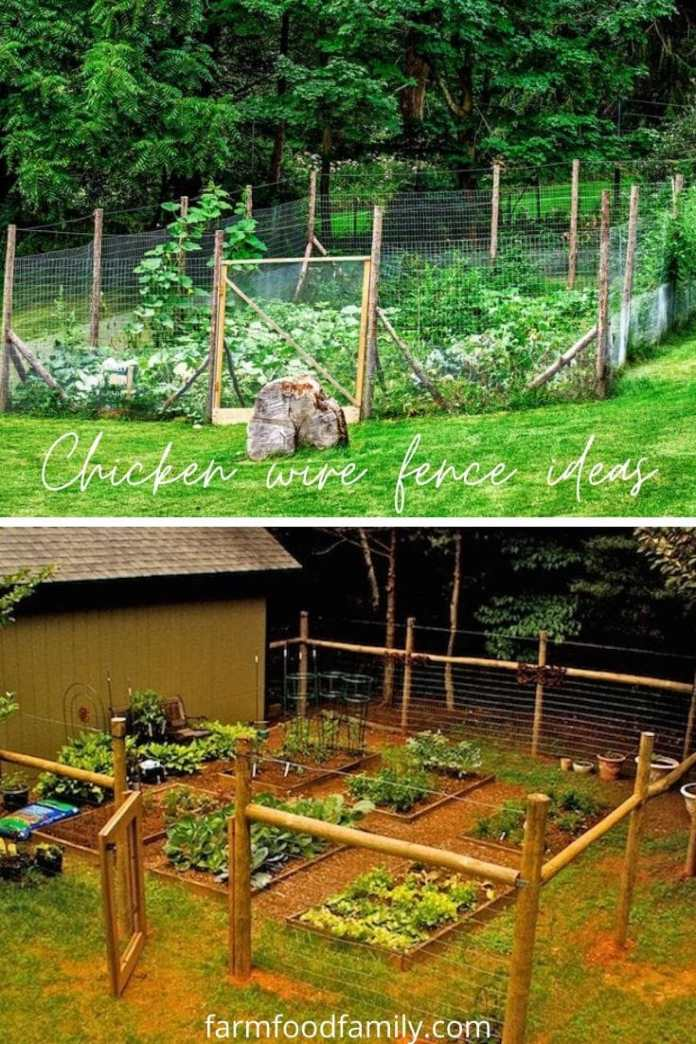 Chicken wire fence ideas
