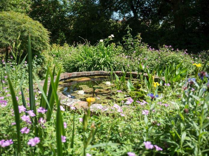 Circular Lily Pond with Tall Plants
