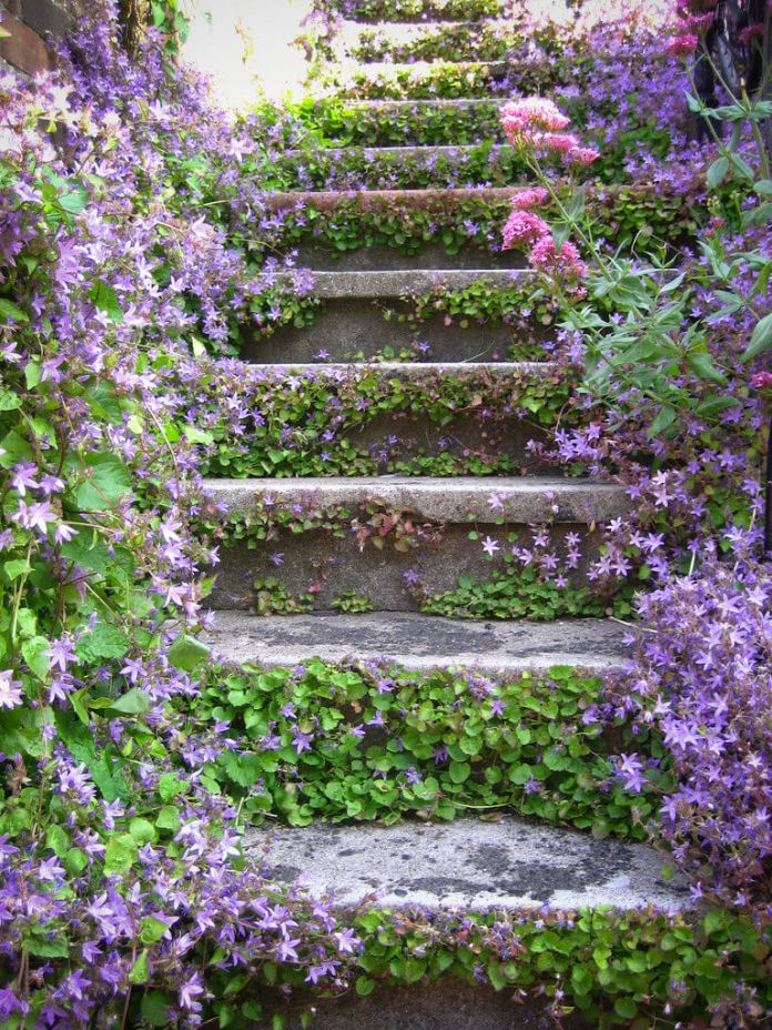 Stone Steps with Ground Cover Flowers
