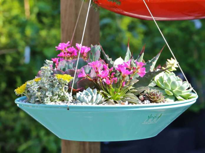 Saucer Style Succulent Hanging Planter | DIY Outdoor Hanging Planter Ideas | Plant Pot Design Ideas