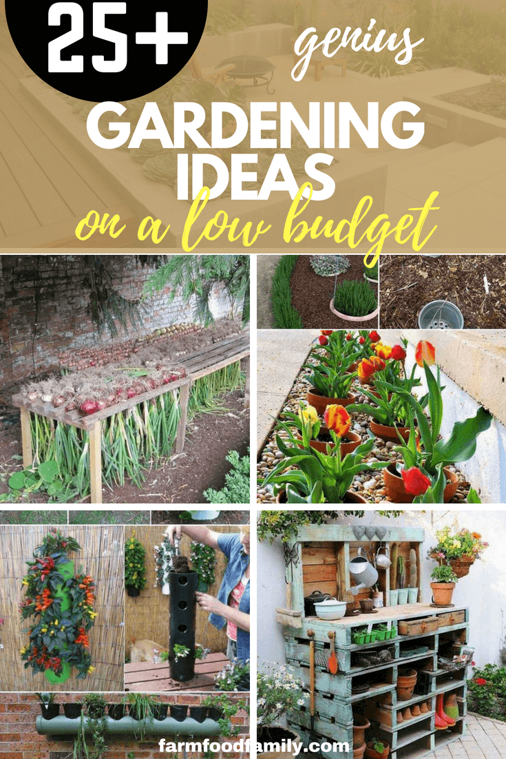 21+ Low Budget Gardening Ideas