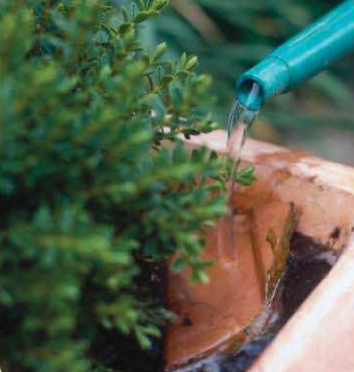 Potted Shrubs Step 5