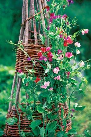 Homemade stick trellis | Up-cycled Trellis Ideas For Garden