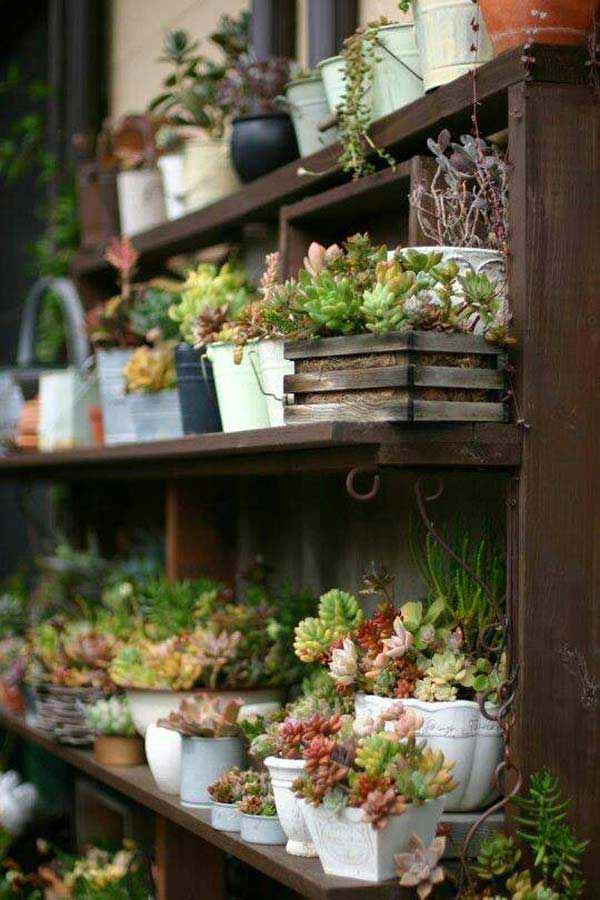 Succulents on display | Smart Mini Indoor Garden Ideas DIY - FarmFoodFamily.com