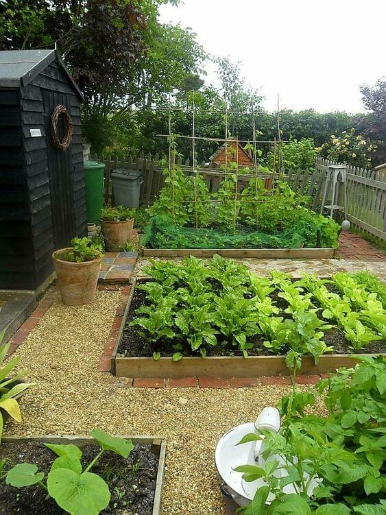 Raised garden beds with pea gravel mulch and edging ideas | Edging Plants for Kitchen Gardens - FarmFoodFamily.com