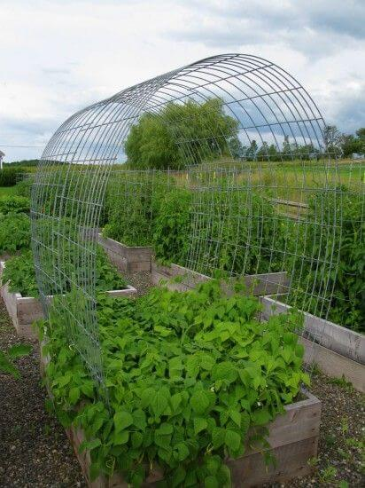 Easy durable Raised Bed Trellising | Edging Plants for Kitchen Gardens - FarmFoodFamily.com