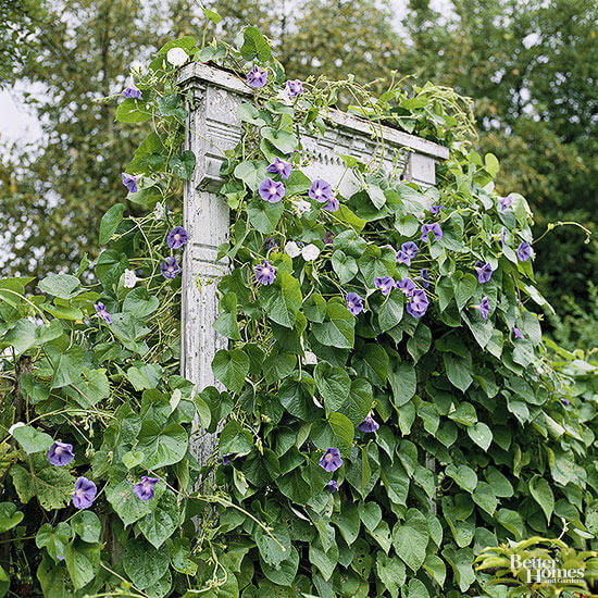 Window Frame Trellis | Up-cycled Trellis Ideas For Garden