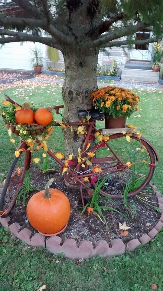 Ready for a bike ride | Bicycle Garden Planter Ideas For Backyards | FarmFoodFamily