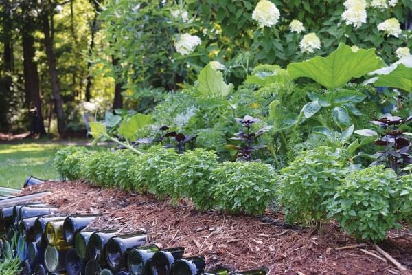 Growing Edible Edges | Edging Plants for Kitchen Gardens - FarmFoodFamily.com