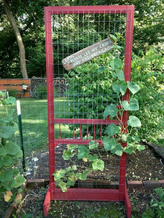 Pea trellis upcycled door | Up-cycled Trellis Ideas For Garden