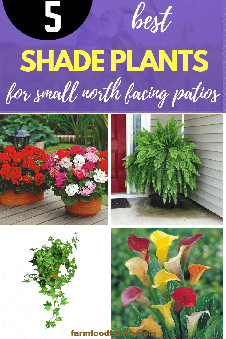 Best shade plants for Small North Facing Patios