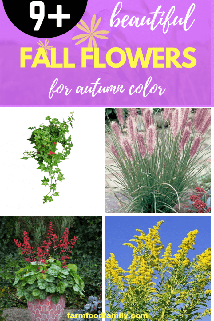 Fall Flowers for Autumn Color: Plants to Keep Fall Color in the Garden Beds, Borders and Containers