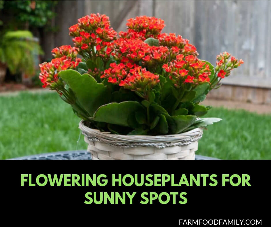 10 Flowering Houseplants For Sunny Spots That Thrive In A Sunny Window