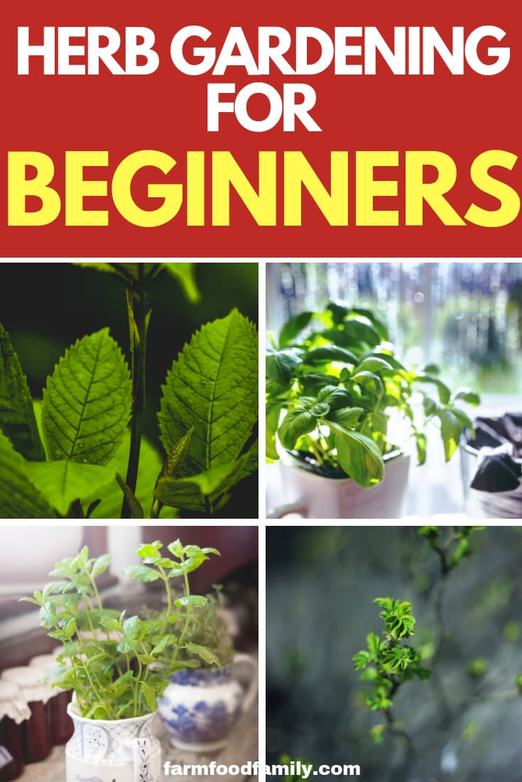 How to start a herb garden: Herb Gardening for beginners