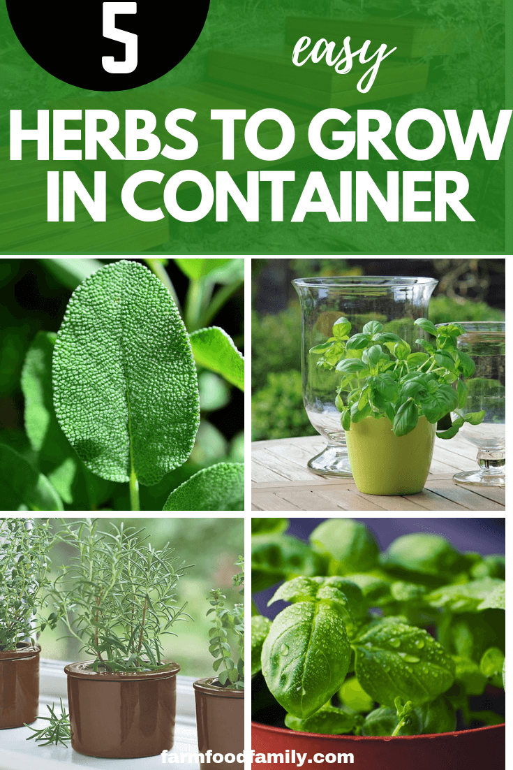 5 easy herbs to grow in container garden